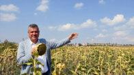 Ayhan Barut : Ayçiçeği üreticisinin mağduriyeti giderilsin