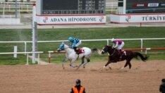 """Yüreğir Belediye Başkanlığı Koşusunda kazanan """"Bildenhan"""""""