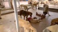 Kozan'da Barınakta aç kalan köpekler birbirine yedi