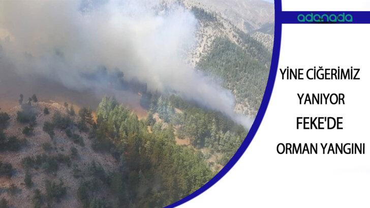 Yine Ciğerimiz Yanıyor , Feke'de Orman Yangını
