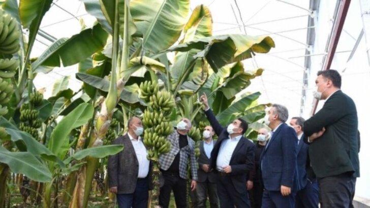 Adana Valisi Süleyman Elban, tarım alanlarında incelemede bulundu