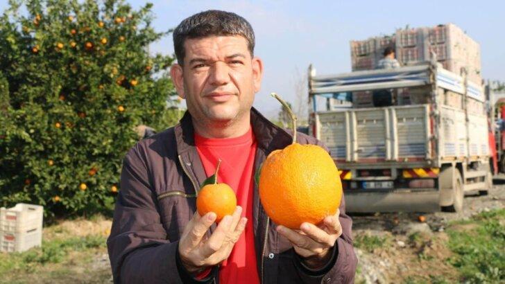 Adana'da 1 kilo 260 gramlık dev portakal görenleri şaşırttı