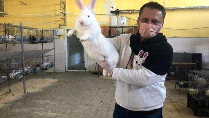 Öğretmenliği bırakıp tavşan çiftliği kurdu