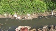 Adana'da tek tırnaklı hayvan başı ve kemikleri bulundu