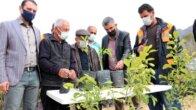 Kozan Belediyesi kamkat üretiyor