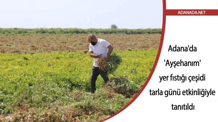 Adana'da 'Ayşehanım' yer fıstığı çeşidi tarla günü etkinliğiyle tanıtıldı