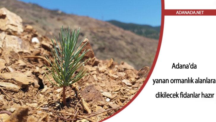 Adana'da yanan ormanlık alanlara dikilecek fidanlar hazır