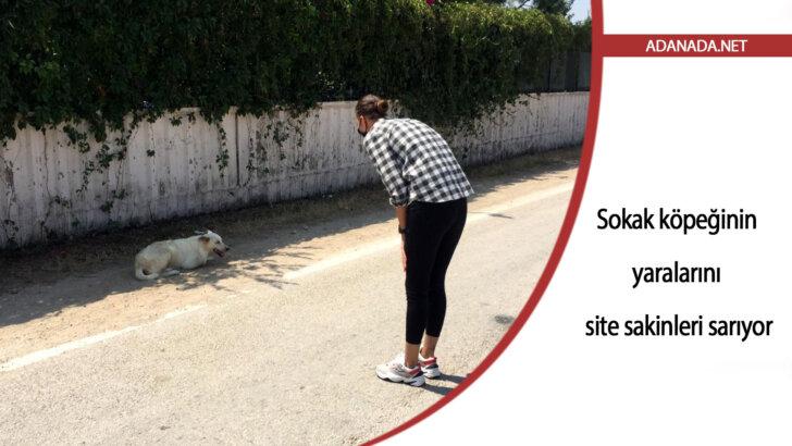 Sokak köpeğinin yaralarını site sakinleri sarıyor